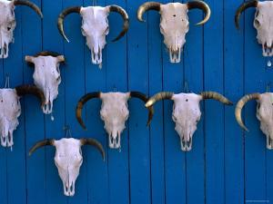 Animal Skulls on Wall, New Mexico by Peter Hendrie
