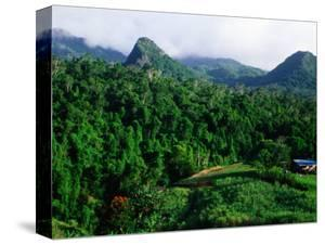 Overhead of Forested Mountains and Cane Field, Nadi, Fiji by Peter Hendrie