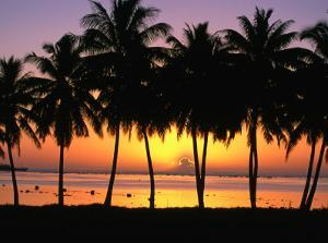 Palm Trees at Sunset, Cook Islands by Peter Hendrie