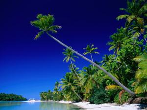 Palm Trees on Beach, Cook Islands by Peter Hendrie