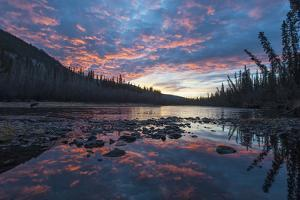 A Grizzly Bear, Ursus Arctos, Hunting Salmon in a River at Sunset by Peter Mather