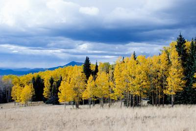 Aspen and Pines