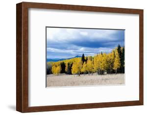 Aspen and Pines by Peter Milota Jr