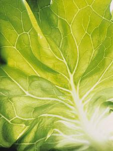 Lettuce Leaf Detail by Peter Rees