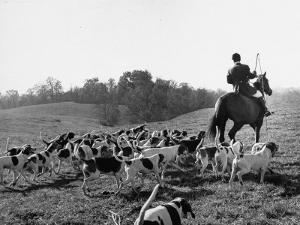 Hounds on a Fox Hunt by Peter Stackpole