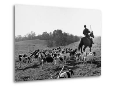 Hounds on a Fox Hunt