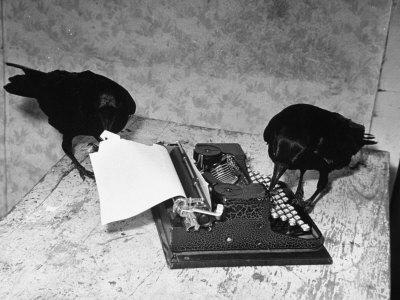 Raven Typing His Own Name of on the Typewriter