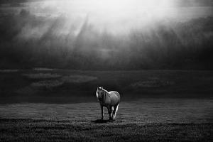 Morning Appearance by Peter Svoboda