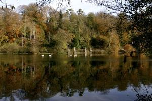 Fonthill Estate Lake, Wiltshire, 2005 by Peter Thompson