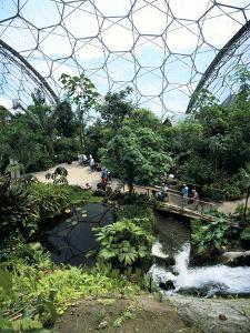 Inside the Humid Tropics Biome, Eden Project, Cornwall by Peter Thompson