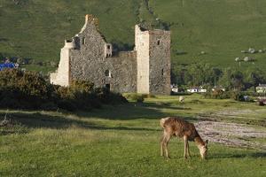 Lochranza Castle, Arran, North Ayrshire, Scotland by Peter Thompson
