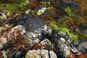 Seaweed Near Eilean Donan Castle, Highland, Scotland by Peter Thompson