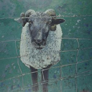 Waiting Sheep, 2000 by Peter Wilson