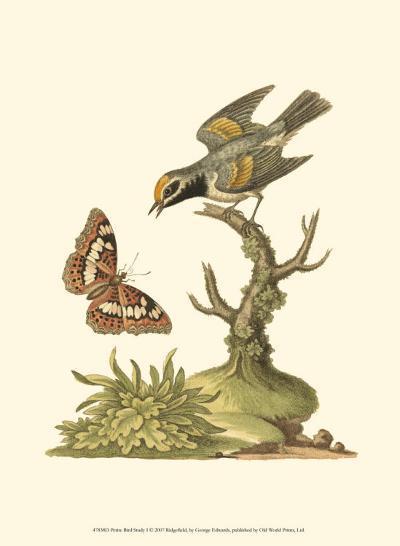 Petite Bird Study I-George Edwards-Art Print