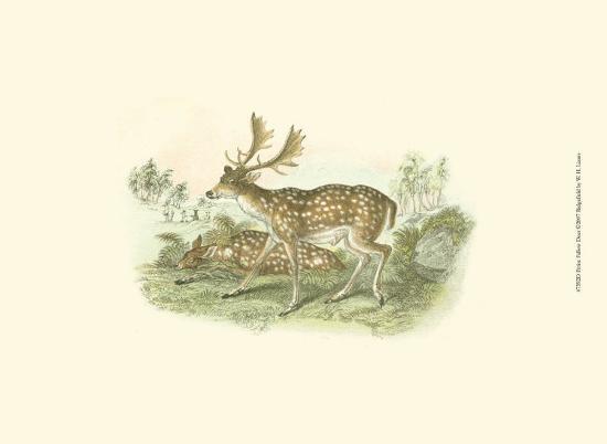 Petite Fallow Deer-W^h^ Lizars-Art Print