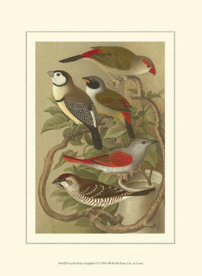 Petite Songbirds II-Cassel-Art Print