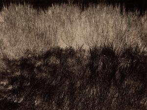 Enigma by Petr Strnad
