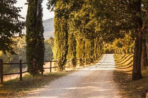 A Trimmed Driveway in Italy in Autumn by Petra Daisenberger
