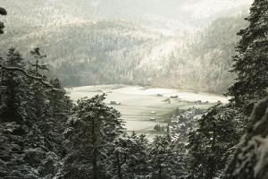 Winter Landscape in Bavaria - Snow by Petra Daisenberger