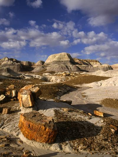 Petrified Forest II-Charles Bowman-Photographic Print