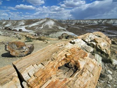 Petrified Logs Exposed by Erosion, Painted Desert and Petrified Forest, Arizona, Usa May 2007-Philippe Clement-Photographic Print