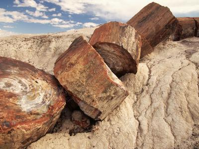Petrified Logs-Joe McDonald-Photographic Print
