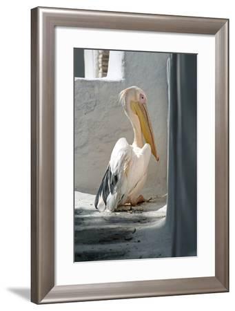 Petros the Pelican, Chora, Mykonos, Greece-David Noyes-Framed Photographic Print