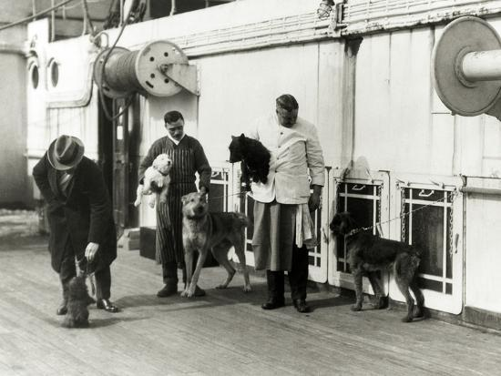 Pets on the Berengaria-Edwin Levick-Photographic Print