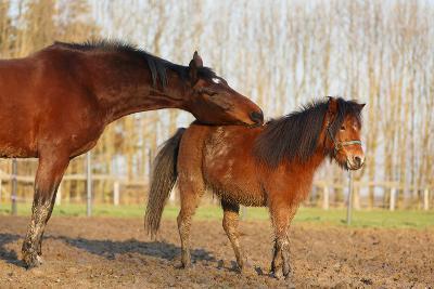Pferd Probiert Pony Ab-Nadine Haase-Photographic Print
