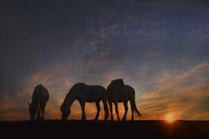 Camargue Sunrise by PH Burchett