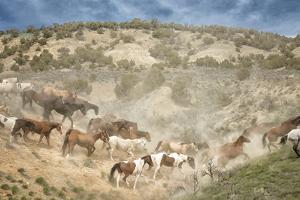 Moving the Herd by PH Burchett