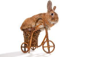 Photo Of Cute Brown Rabbit Riding Bike Isolated On White by PH.OK