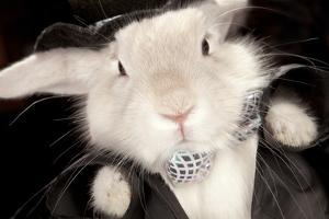 Portrait Of Cute Rabbit In Top Hat And Bow-Tie. Isolated On Dark Background by PH.OK