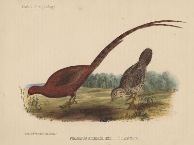 Phasianus Soemmeringh (Temminck), 1855--Giclee Print