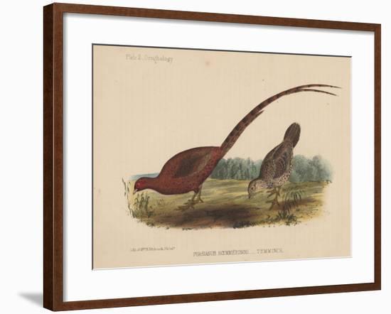 Phasianus Soemmeringh (Temminck), 1855--Framed Giclee Print