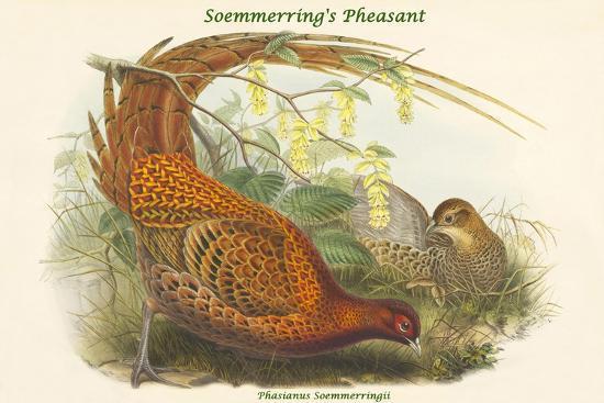 Phasianus Soemmerringii - Soemmerring's Pheasant-John Gould-Art Print