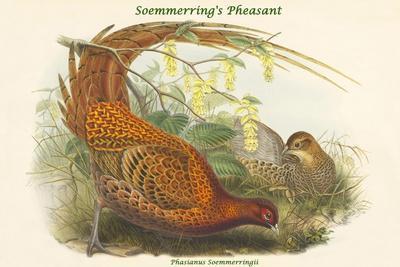 https://imgc.artprintimages.com/img/print/phasianus-soemmerringii-soemmerring-s-pheasant_u-l-pqpjez0.jpg?p=0