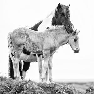 B&W Horses I by PHBurchett