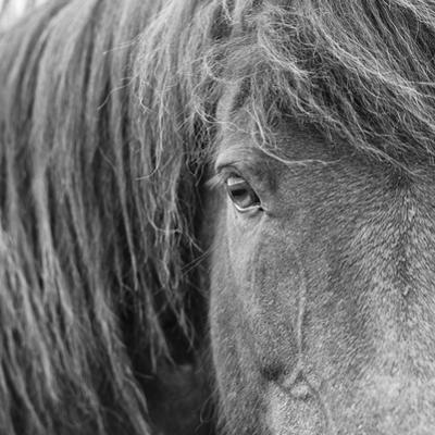B&W Horses VI by PHBurchett