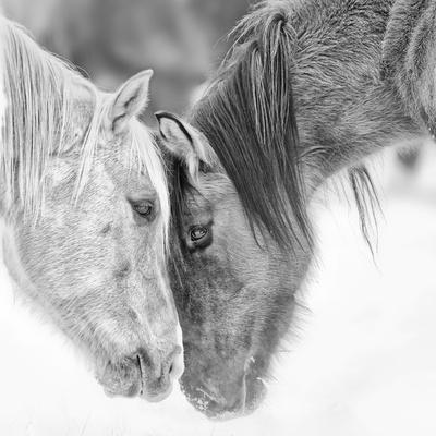 B&W Horses VII