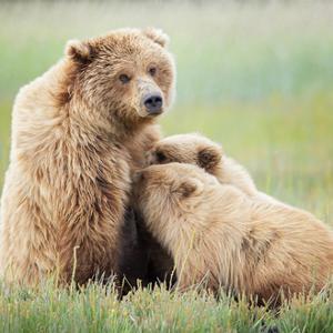 Bear Life II by PHBurchett