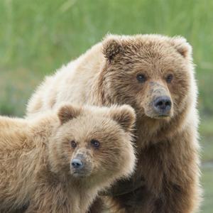 Bear Life III by PHBurchett