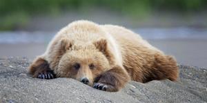 Bear Life X by PHBurchett
