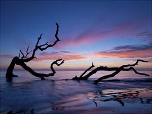 Driftwood Beach by PHBurchett
