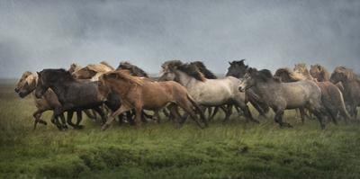 Icelandic Horses XIII by PHBurchett