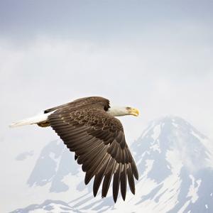 Majestic Eagle I by PHBurchett