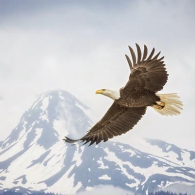 Majestic Eagle II by PHBurchett