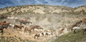 Moving the Herd by PHBurchett