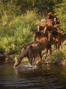 River Horses I by PHBurchett