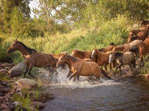River Horses II by PHBurchett